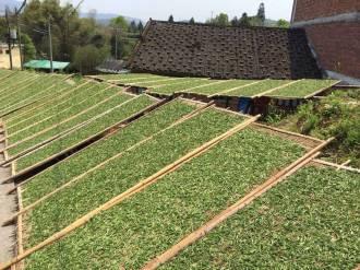 sun drying tea